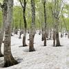 ◆'20/05/16   残雪と新緑の県立自然博物園へ②