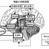 情動の神経回路とオペレーティングシステム
