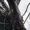 🐦野鳥の回【24】やはり野鳥撮影のハードルは高かった