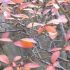 庭の草木の紅葉