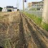 浜ちゃん日記 健康広場のひまわり種まき
