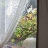 今朝の庭から・・・コバノズイナの紅葉始まる