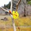 3月11日春の力