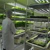 小田原市のITサービス会社 オーディーシーが野菜ビジネスに参入