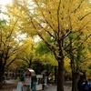 札幌市 北大 銀杏並木 20201025 / ここもコロナの影響あり