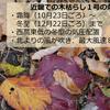 【木枯らし1号】大阪管区気象台気象台は11月22日に近畿地方で『木枯らし1号』が吹いたと発表!東京地方では1979年以来39年振りに『木枯らし1号』が吹かないかも!?