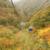 日本最長のロープウェーで紅葉を楽しむ!湯沢町苗場スキー場「ドラゴンドラ」