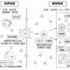 【生物基礎】第3章 体内環境と恒常性(免疫)