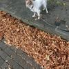 筋トレの秋