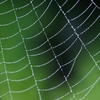 僕が作ってしまった神曲『蜘蛛の糸』について解説しようと思う。