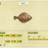 【あつまれどうぶつの森】魚「カレイ」の入手方法・出現場所・使い道一覧