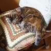 椅子寝、始めました。