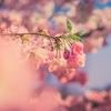 《お知らせ》春ゼミの学習内容(現中1生/新中2生)