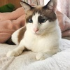 かわいいかわいい我が家のお猫様
