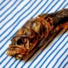 有明海のエイリアン「ポリポリわらすぼ」を食べた感想。