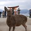 厳島・厳島神社(広島県廿日市市)【島巡りその2】【社寺巡りその2】