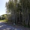 発電所裏の竹林。DIYで伐採にチャレンジ!