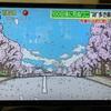 桜の季節はじまる---
