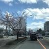 外出自粛の桜の写真は、レストランの庭の木ではありません