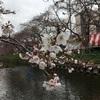 【花見】一年ぶりの、桜まつりデート