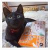 Instagramに投稿した「ちびねこ亭の思い出ごはん 三毛猫と昨日のカレー」と猫さん
