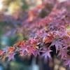 秋晴れの午後、『根津美術館』の庭園を散策