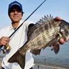 【チヌ釣り】簡単に出来る仕掛けを紹介!初心者でも釣れる狙い方