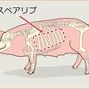 スペアリブとは何なの?リブの意味は?部位は豚と牛で違うのは何故