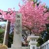八重桜が満開を迎えております