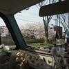一の坂川桜満開