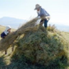 冬支度、こんもり 阿蘇の風物詩「草小積み」づくり始まる