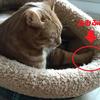 室内猫と外猫さんの睡眠事情