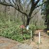 ◆4/3     高館山…横道を歩く③…城山コース~岩倉コースへの横道