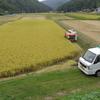 稲の収穫終了と現金な牛達!!