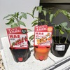 家庭菜園 サントリー本気野菜 ミニトマト