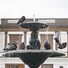 【一日一枚写真】鳩達の水浴び Part.3【一眼レフ】