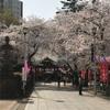 蓮馨寺の桜と大正浪漫通り 川越