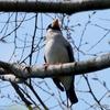 日本 4月27日の文殊の森公園で出会った野鳥たち