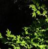 八田さんの自家旅「面河山」 原生の森