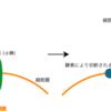可溶性IL2受容体(sIL-2R)高値の原因と意義
