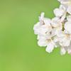 岡崎公園の緑と桜のコラボレーション