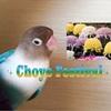 Choyo Festival    重陽の節句