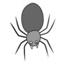 家に出るクモの対策と駆除方法7選&種類と見分け方9選!【生態、益虫、害虫】