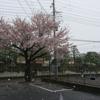 雪と桜と雪見だいふく。ガリぞう氏とマイホ近況