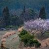 京都・水尾 - 里山の春の訪れ