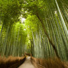 京都のご当地納豆「牛若納豆」を食べました(あと京都の情報も少しだけ)