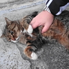 12月前半の #ねこ #cat #猫 その4