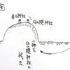 大分県日田市の神社めぐり 三隈三山のひとつに祀られる日隈神社