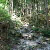 奥多摩登山~高水三山~