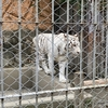 東武動物公園に行ってきました!客層・園内をご紹介!
